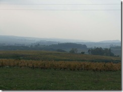 vineyards b4 poligny 1