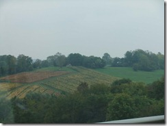 vineyards b4 poligny