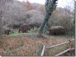 mammoth and rgino