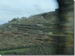 terraced land for vines
