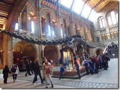dinosoaur