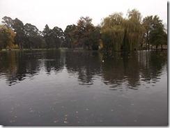 ducks at lake