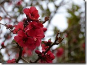 spring blossom 2
