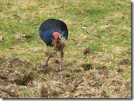 bird plough