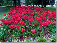 flower beds_thumb[1]