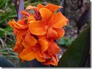 orange_thumb[2]