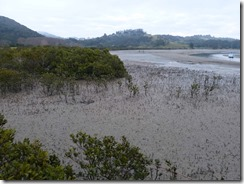 18 mangrove