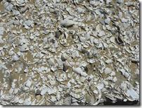 39 shell