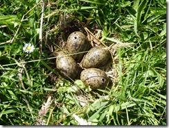 54 eggs