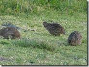brown quai 2